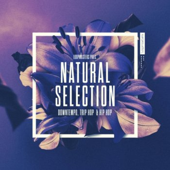 Сэмплы Loopmasters Natural Selection (Ableton Live)