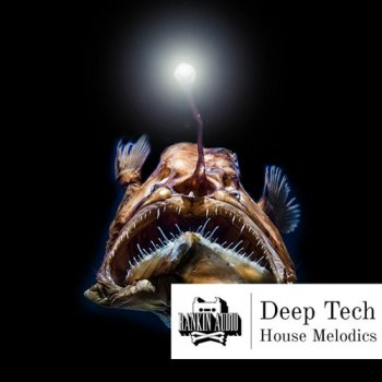 Сэмплы Rankin Audio Deep Tech House Melodics